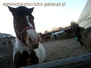 Obozy jeździeckie, pierwszy galop - zdjęcie, fotografia