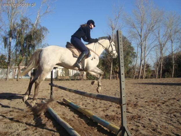 Prawo i przepisy jeździeckie, Instruktor szkolenia podstawowego kursy koszt - zdjęcie, fotografia