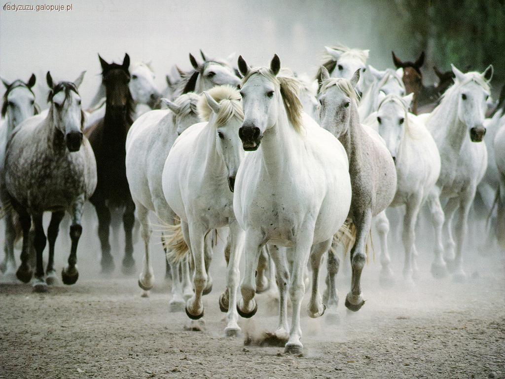 Felietony blogerów, Cytaty myśli jeździeckie - zdjęcie, fotografia