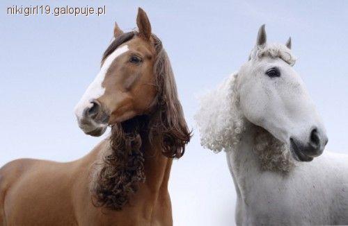 Fryzury Z Grzywy I Ogona Jeździectwo Konie Galopujepl