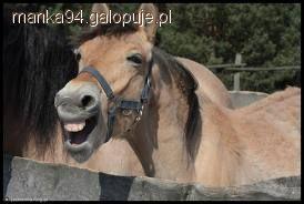 Humor jeździecki, Rycerz - zdjęcie, fotografia