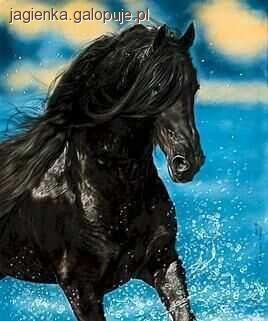 Hodowla koni, Praca koniem poznawanie koniem - zdjęcie, fotografia