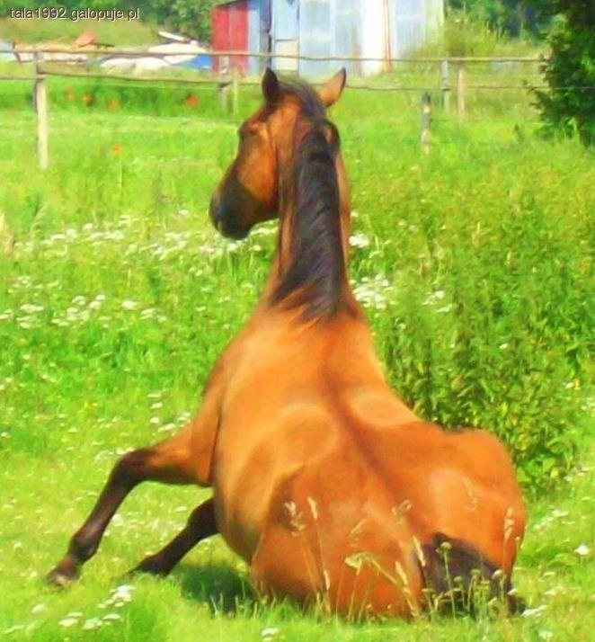 Imprezy jeździeckie, motta przysłowia cytaty - zdjęcie, fotografia