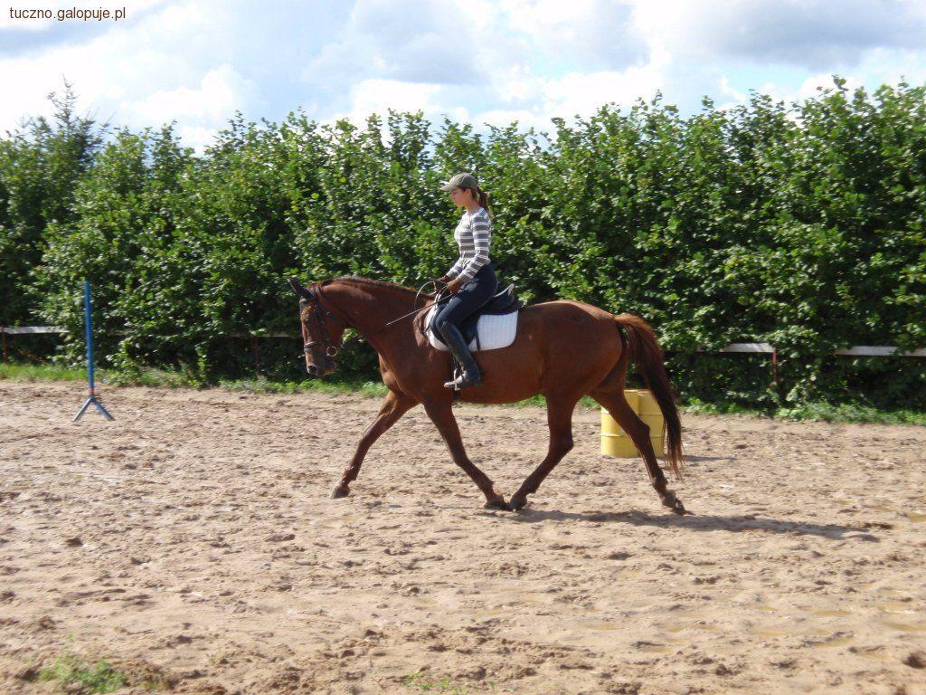 Ośrodki jeździeckie, instruktor stajni Jutrzenka - zdjęcie, fotografia