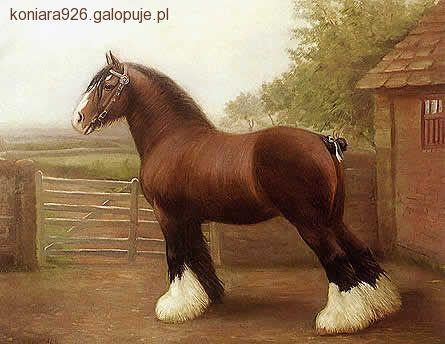 Prawo i przepisy jeździeckie,  - zdjęcie, fotografia