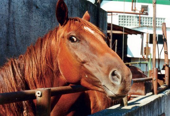 Ochrona koni, Rzeź zabijaniu – przyłącz akcji - zdjęcie, fotografia