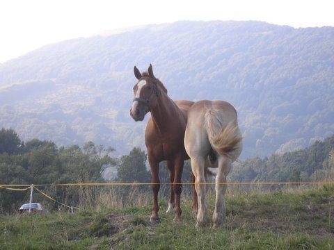 Weterynaria, Kolka konia – zmora zwierząt właścicieli - zdjęcie, fotografia