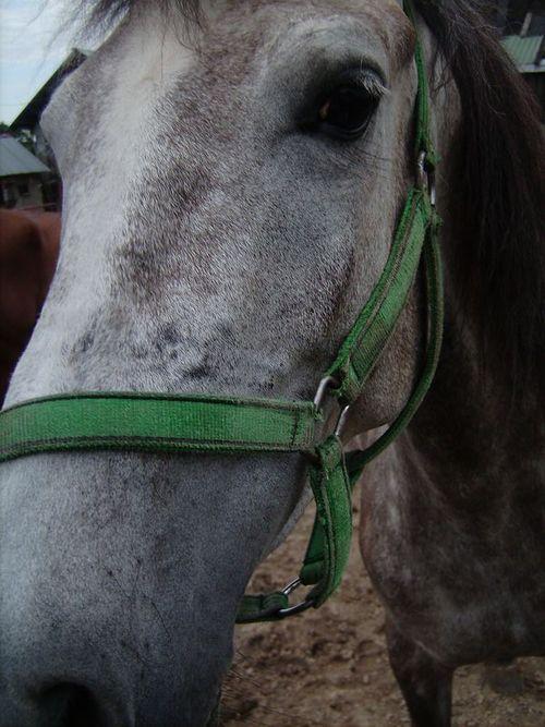 Imprezy jeździeckie, urodziny - zdjęcie, fotografia