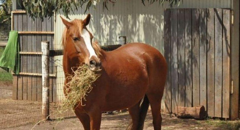 Weterynaria, wiemy końskim żołądku - zdjęcie, fotografia