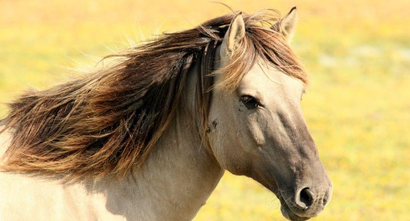 Biznes jeździecki, każdy widzi - zdjęcie, fotografia