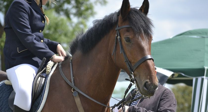 Zawody jeździeckie, MISTRZOSTWA WARSZAWY MAZOWSZA DUŻYCH UJEŻDŻENIU KORYTA - zdjęcie, fotografia