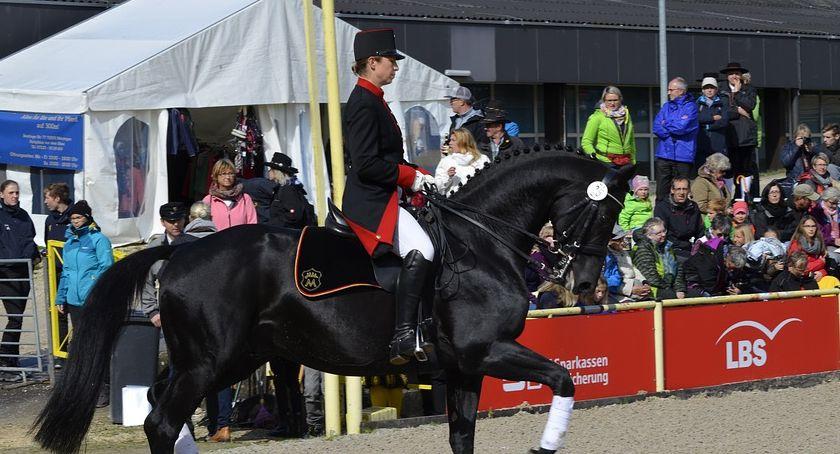 Zawody jeździeckie, Zawody Regionalne Towarzyskie - zdjęcie, fotografia