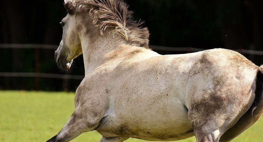 Zawody jeździeckie, ZawodyTowarzyskiew skokach przez przeszkody Kucach naMałych Dużych Koniach - zdjęcie, fotografia