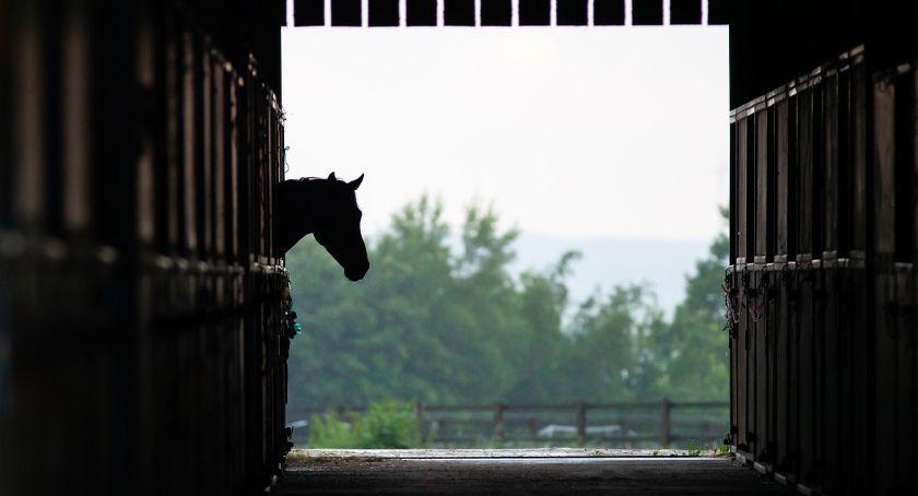 Biznes jeździecki, Ciężki dzień stajni Sprawdzamy zaradzić - zdjęcie, fotografia