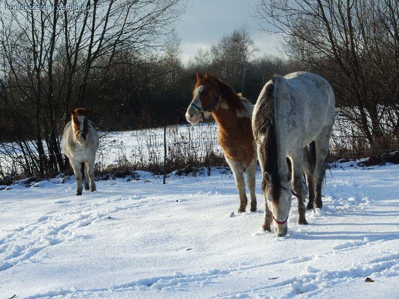 Hodowla koni, Zdecydowana większość końskich chorób wynika trzymania zamkniuęciu!! - zdjęcie, fotografia
