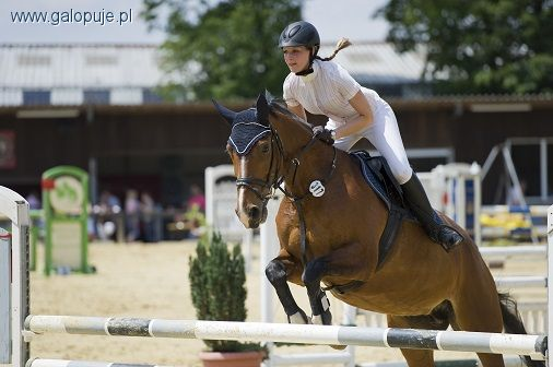 Biznes jeździecki, rozpocząć swoją przygodę jeździectwem - zdjęcie, fotografia