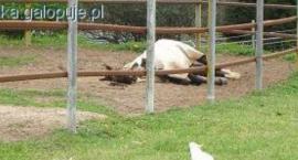 Konie w upał