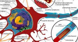 Jak działa mózg konia