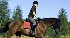Przyczyny machania głową u koni