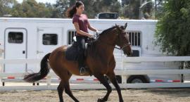 Kontakt w pracy z koniem