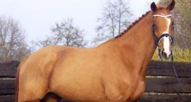 Przygotowanie konia do zimy