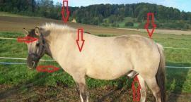 Jak dbać o konia z EMS
