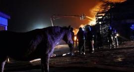 Tragiczny pożar stadniny: spłonęły zwierzęta