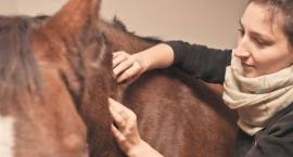 Warsztaty z fizjoterapii i rehabilitacji koni
