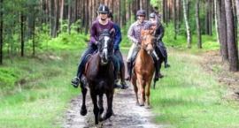 Jeździectwo dla wymagających