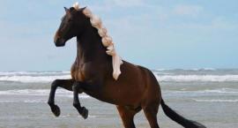 Naturalna pielęgnacja dla konia i jeźdźca