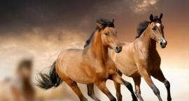 Konie moja pasja