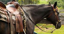 Ból grzbietu u konia