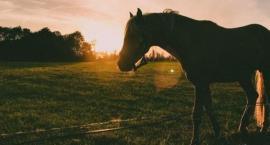 Sklep z paszami dla koni - Polecamy