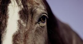 W jaki sposób kontrolować stan zdrowia naszego konia?