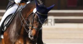 Jazda konna- sport czy miłość do koni?