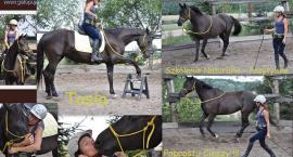 Lidia Kacperska - kliker w treningu koni