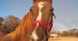 Nerwowy koń?