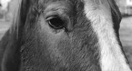 Mój Pierwszy Koń - Co powinieneś wiedzieć?