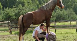 Budowanie relacji z końmi