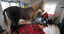 Koń w domu