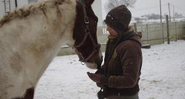 Zima z końmi