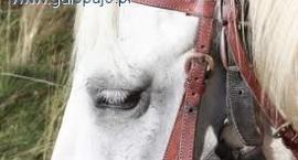 Popularność jeździectwa