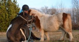 """Wyniki konkursu fotograficznego """"Mój Koń"""""""
