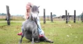 Kupowanie konia - rady
