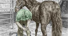 Warsztaty - Zdrowe kopyta Twojego konia