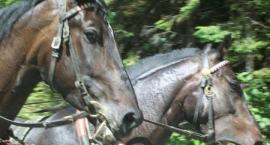 Upały na zewnątrz – nie korzystajmy z transportu konnego
