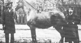 Konie wczoraj i dziś