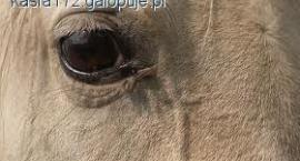 Końskie zmysły - wzrok, słuch i węch