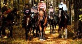 Stowarzyszenie Jeździeckie Szarża zaprasza na końskie grzbiety
