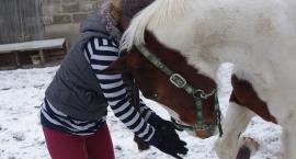 Żywot konia rekreacyjnego